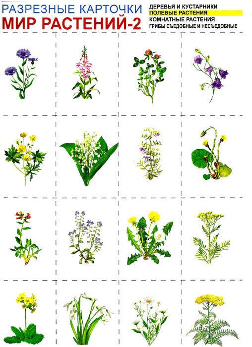 Детям о растениях в картинках